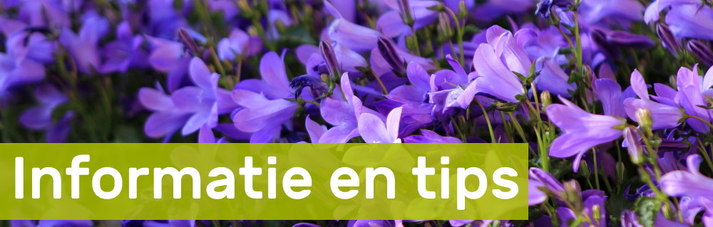 Informatie en tips over houten plantenbakken